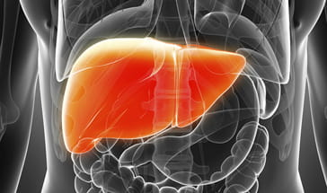 black and grey vector of orange liver